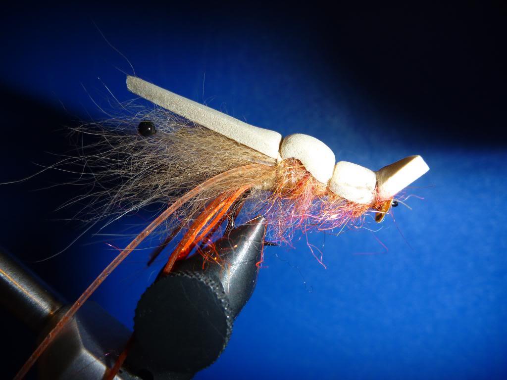 Disco Shrimp10