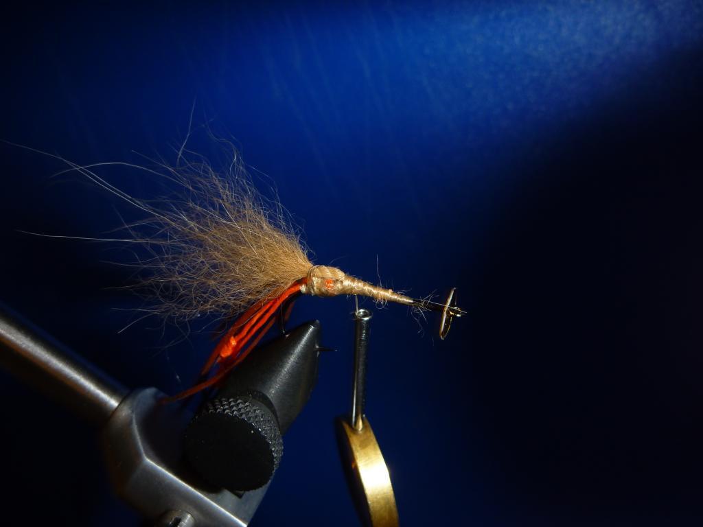 Disco Shrimp3