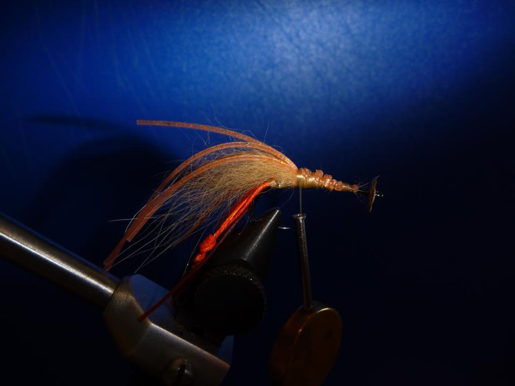 Disco Shrimp4