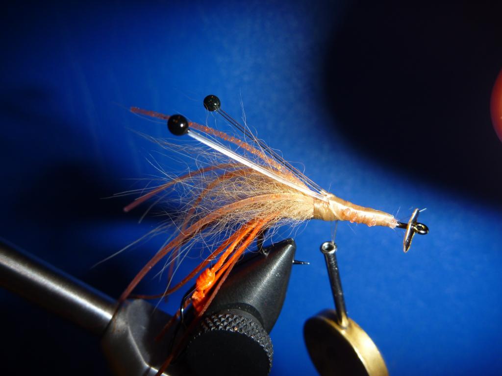 Disco Shrimp5